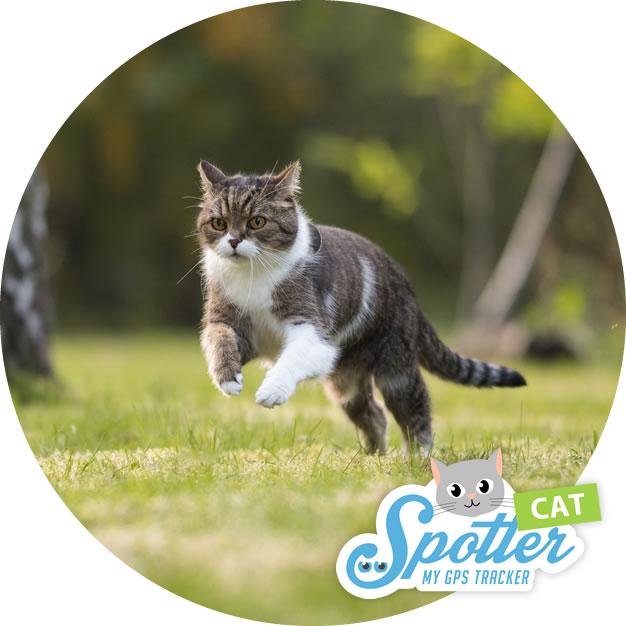 gps tracker katze jump - Pet Spotter