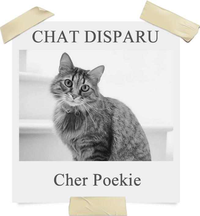 GPS pour chat Spotter - disparu
