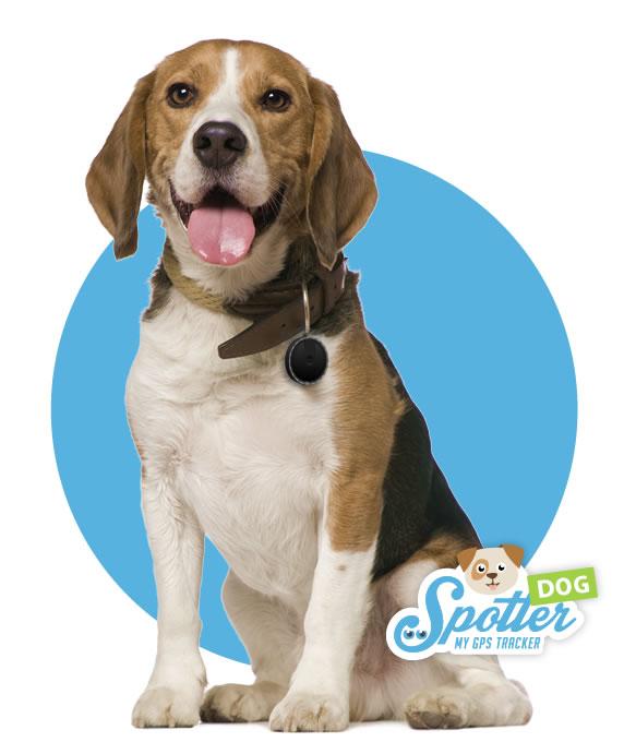 gps chien - Spotter