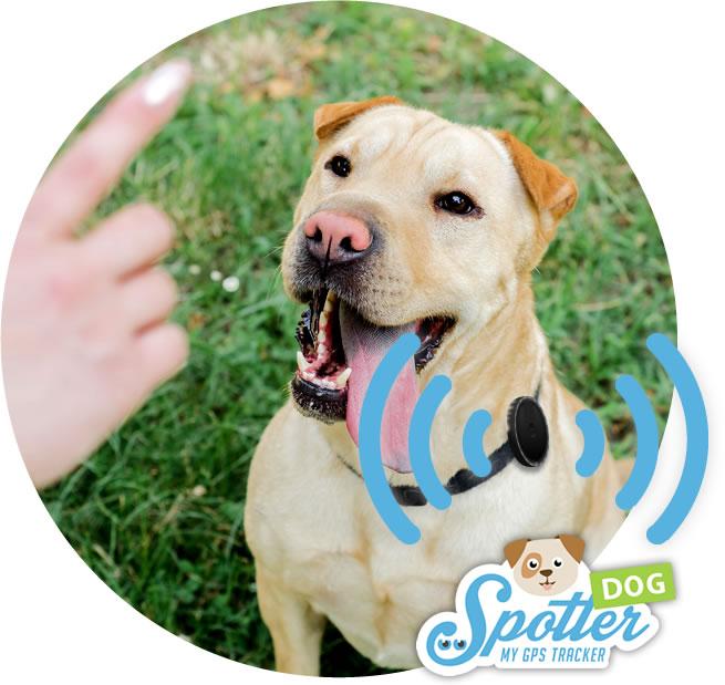 gps chien Spottter - former