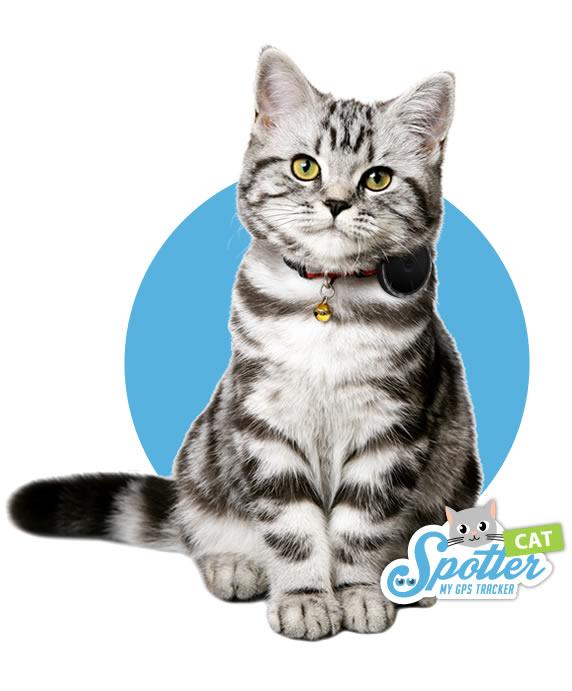 gps pour chat - Spotter