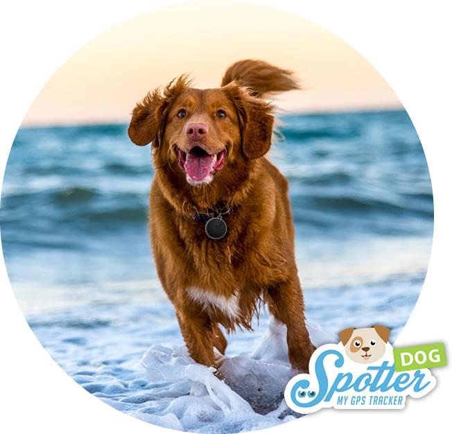 traceur gps chien spotter - activités