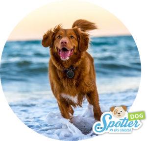 GPS tracker hond - rennen Spotter