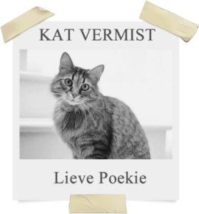 Kat vermist - gps tracker kat Spotter